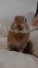 avatar.php?userid=3435471&size=small&timestamp=kagamisaki