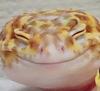 Quite fond of geckos