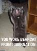 Bear-run