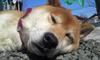 avatar.php?userid=4185586&size=small&timestamp=shu-yabiyabi