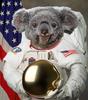 KoalaimWeltraum