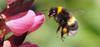 Professor Bee