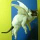 WingedCat