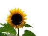 avatar.php?userid=3432047&size=small&timestamp=shu-yabiyabi