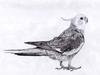 BirdythePhoenix