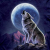 Gracious Wolf