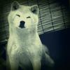 mori_gami