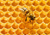 Dr BEES