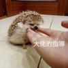 LuLu_Lucifelle