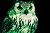EmeraldOwl