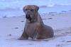Sealdog