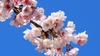 avatar.php?userid=7153717&size=small&timestamp=keikiryuu