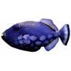 purplefishman