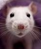 ratsy