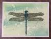 AceOfDragonflies