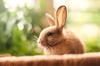Calm rabbit