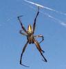Communist_Spider