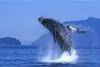 Dr Whale