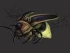 ShinyFirefly