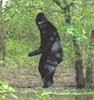 TexasBigfoot