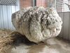 SheepDude3000