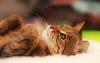 Rayne Kitty