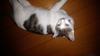 niwa_tori