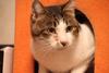 catfood-2525299