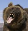grizzlysmit