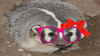 Badger Gal