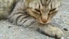 avatar.php?userid=2273458&size=small&timestamp=shu-yabiyabi