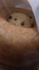 avatar.php?userid=4678767&size=small&timestamp=kyalready