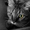 avatar.php?userid=3396310&size=small&timestamp=shu-yabiyabi
