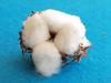 cottonbomb