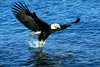 EagleOfLivingWaters