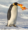 PenguinPower