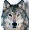 Wolfguy44