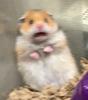HamsterGunster252