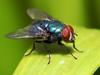 FlyByte