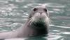 sir seal
