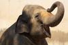 elephant anchor