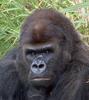 gorillalady