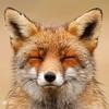 FOXbuddy