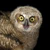 Owl_Doctor