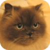 avatar.php?userid=1410999