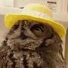 OwlDude