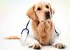 Dr Dogo