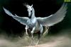 Pegasus178