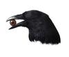 Blind_Raven
