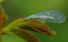 Insecticidevrij